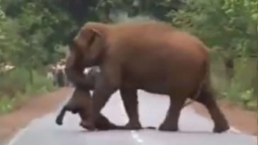 viral video ελεφαντας