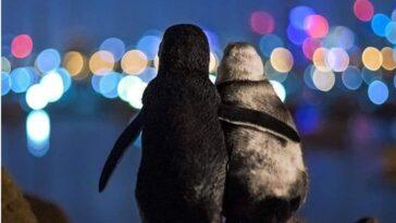 Viral-φωτογραφια-πιγκουινοι